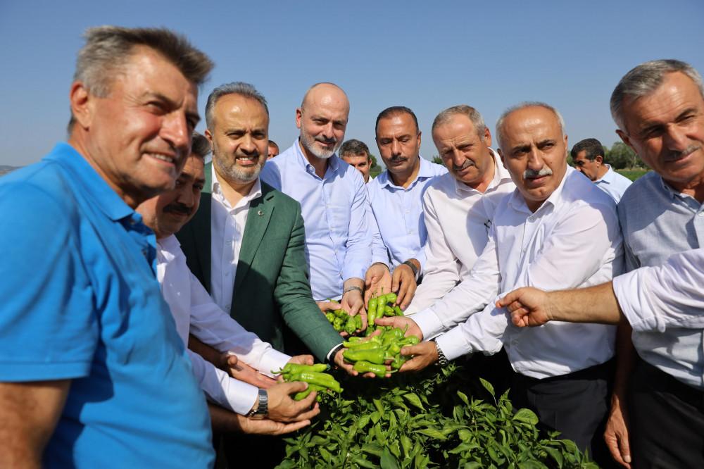Bursa Büyükşehir destekliyor, çiftçi kazanıyor